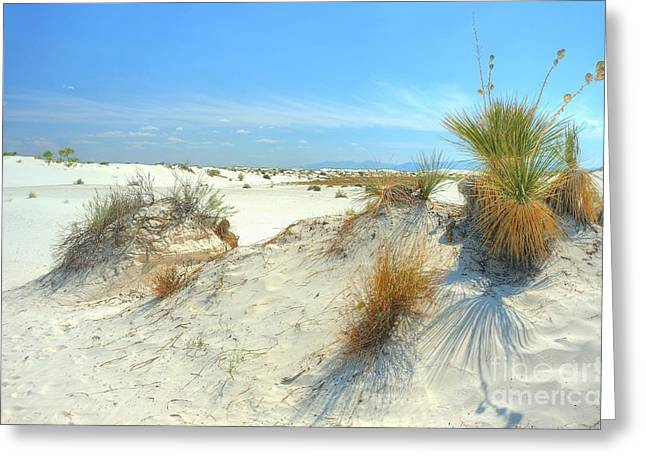 Kelly Greeting Cards - White Sands Foliage Greeting Card by John Kelly