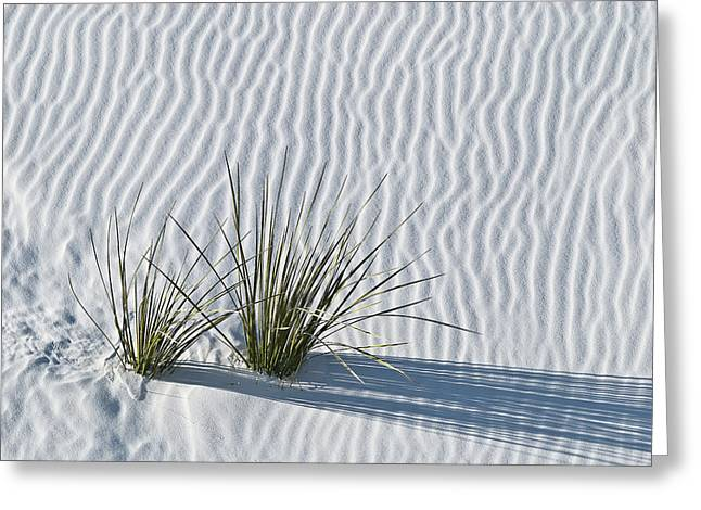 White Photographs Greeting Cards - White Sands Grasses Greeting Card by Steve Gadomski