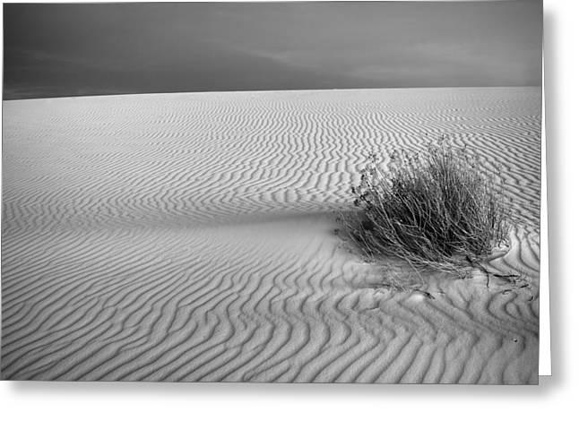 Scrub Brush Greeting Cards - White Sands Scrub BW Greeting Card by Peter Tellone