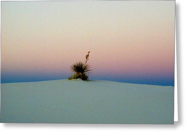 White Pyrography Greeting Cards - White Sands Yucca Greeting Card by Jim Jones