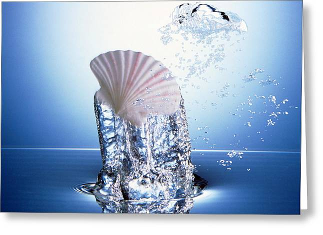 Ocean Images Greeting Cards - White Scallop Shell Being Raised Greeting Card by Panoramic Images