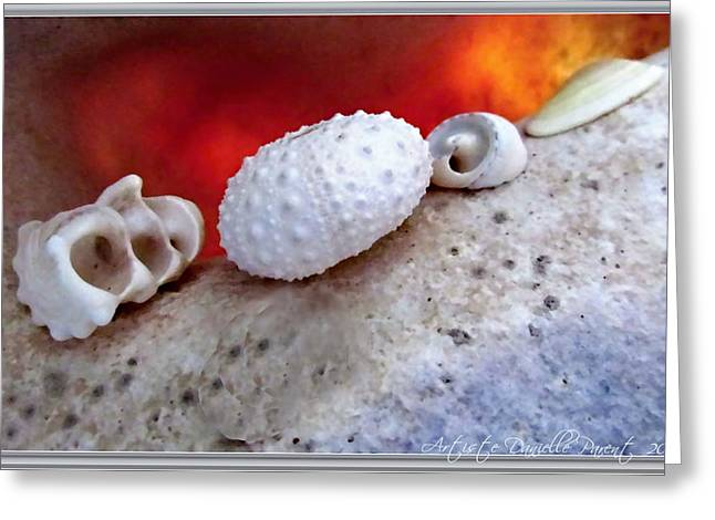 White Seashells And Purple Conch  Greeting Card by Danielle  Parent
