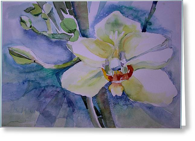 Easter Flowers Drawings Greeting Cards - White Shades of Orchid Greeting Card by Mindy Newman