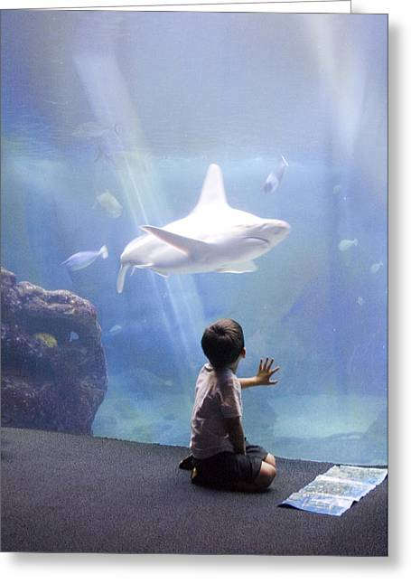 ; Maui Greeting Cards - White Shark and Young Boy Greeting Card by David Smith