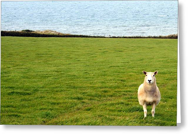 Ocean Mammals Greeting Cards - White sheep in a green field by the sea Greeting Card by Nomad Art And  Design