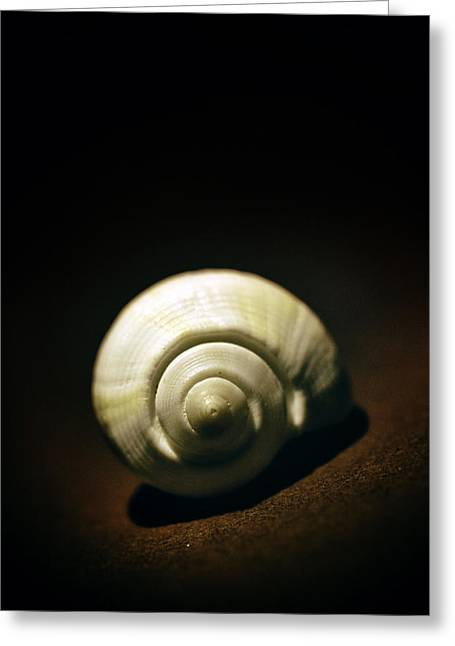 Breakable Greeting Cards - White shell Greeting Card by Jaroslaw Blaminsky