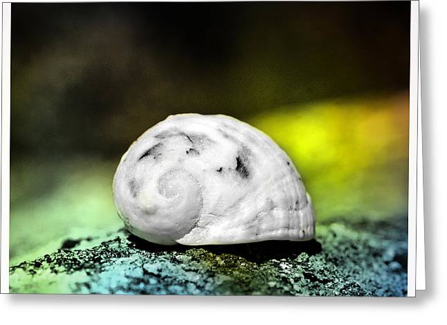 Shell Pattern Mixed Media Greeting Cards - White Shell on a rock Greeting Card by Toppart Sweden