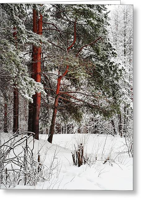 White Silence 1 Greeting Card by Jenny Rainbow