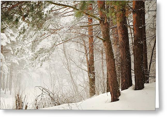 Blizzard Scenes Greeting Cards - White Silence Greeting Card by Jenny Rainbow