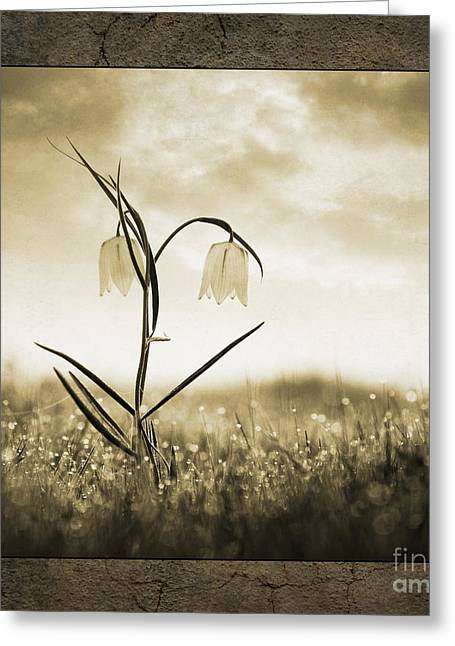 Morning Dew Greeting Cards - White Snakes Head Fritillary in Morning Dew Greeting Card by Tim Gainey