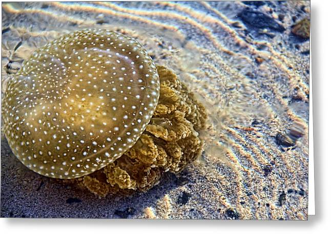 Jelly Fish Greeting Cards - White spotted jelly fish Greeting Card by Josephine Caruana