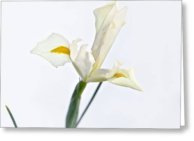 White Beard Greeting Cards - White Iris on White Greeting Card by Mary Lee Dereske