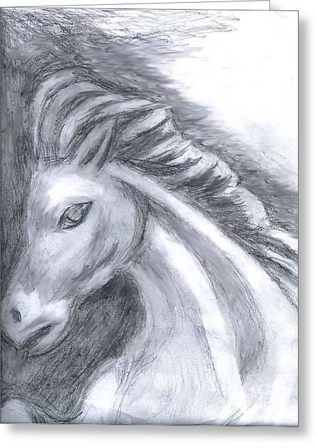 Gradations Drawings Greeting Cards - White Stallion Greeting Card by Owen McCafferty