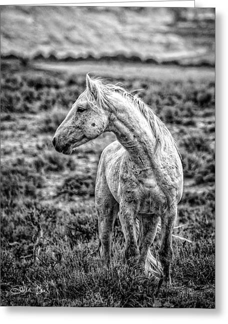 Historical Images Greeting Cards - White Stallion Watching Greeting Card by Joan Davis