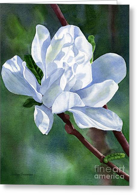 White Paintings Greeting Cards - White Star Magnolia Blossom with Background Greeting Card by Sharon Freeman