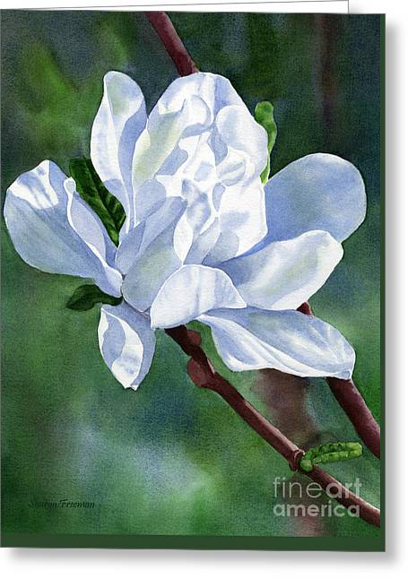 Magnolia Tree Greeting Cards - White Star Magnolia Blossom with Background Greeting Card by Sharon Freeman