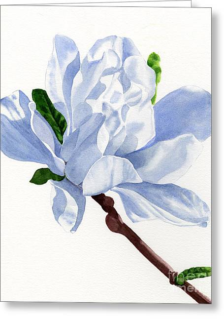White Paintings Greeting Cards - White Star Magnolia Blossom with White Background Greeting Card by Sharon Freeman