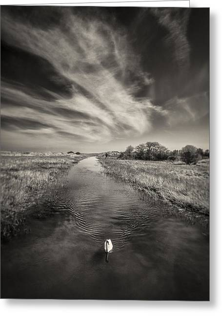 Sepia White Nature Landscapes Greeting Cards - White Swan Greeting Card by Dave Bowman