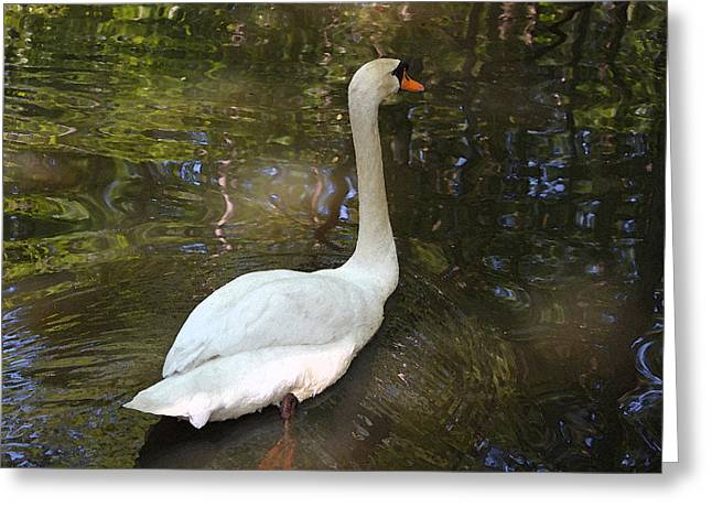 Low Country Watercolor Greeting Cards - White Swan IV Greeting Card by Suzanne Gaff