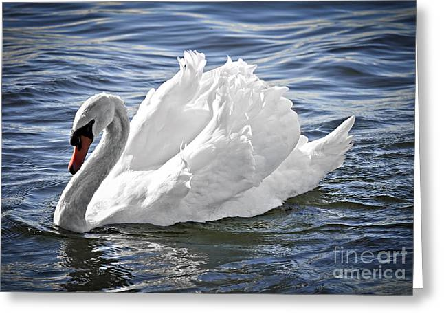 White Bird Greeting Cards - White swan on water Greeting Card by Elena Elisseeva