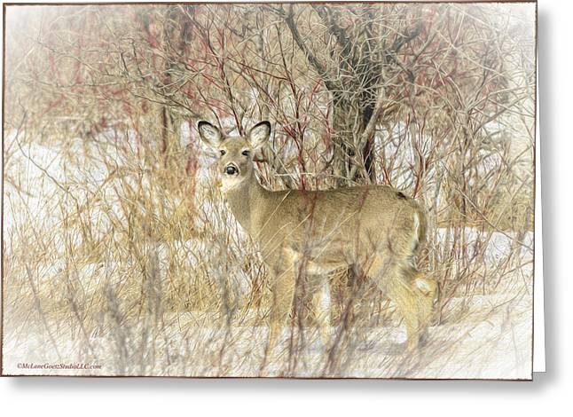 Grazing Snow Greeting Cards - White Tail Deer Art Greeting Card by LeeAnn McLaneGoetz McLaneGoetzStudioLLCcom