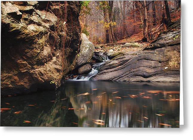 Lanscape Greeting Cards - White tail Greeting Card by Rob Dietrich