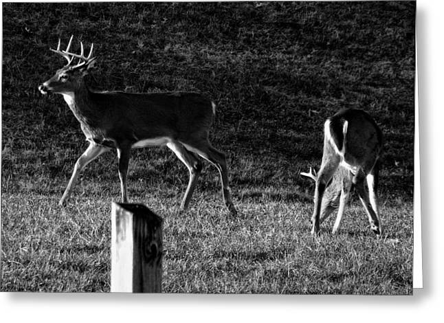 Print On Canvas Greeting Cards - White tailed Deer Greeting Card by Chris Flees