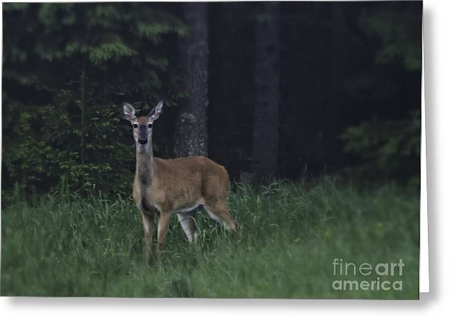 Atmospheric Greeting Cards - White-tailed deer Greeting Card by Veikko Suikkanen