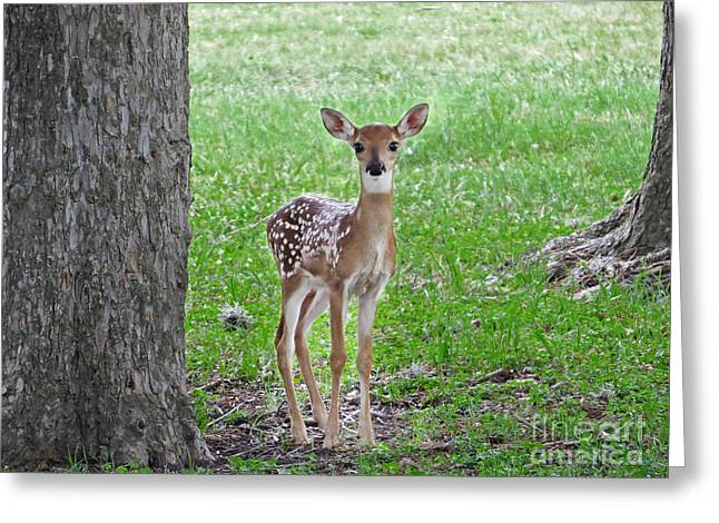 Innocence Greeting Cards - White-Tailed Fawn - Face of Innocence Greeting Card by Ella Kaye Dickey