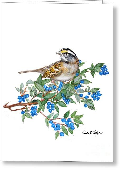 Blueberry Drawings Greeting Cards - White-throated-sparrow Greeting Card by Carol Veiga