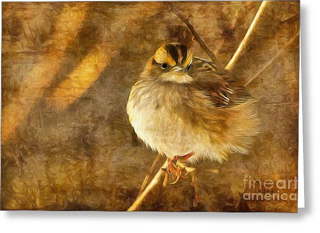 Sparrow Digital Art Greeting Cards - White Throated Sparrow Greeting Card by Lois Bryan