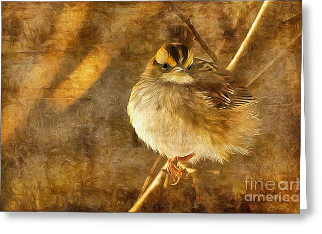 Digital Paint Greeting Cards - White Throated Sparrow Greeting Card by Lois Bryan