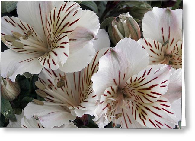 Stamen Digital Art Greeting Cards - White Tiger Azalea Greeting Card by Ben and Raisa Gertsberg