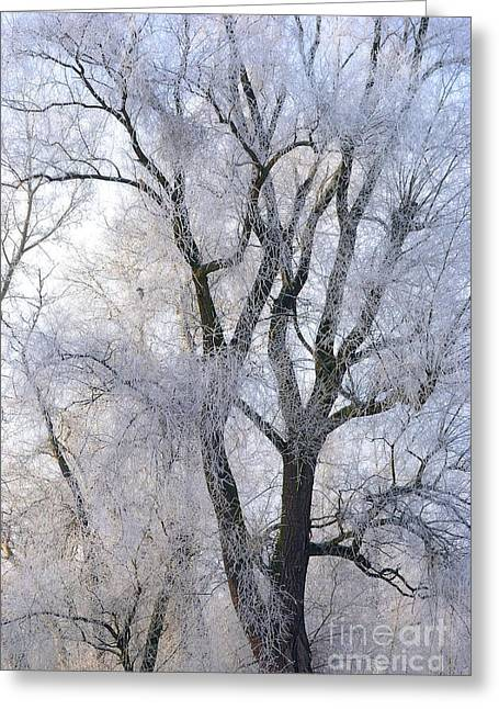 Snowy Day Greeting Cards - White tree Greeting Card by Martin Capek