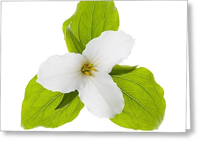 White Trillium flower  Greeting Card by Elena Elisseeva