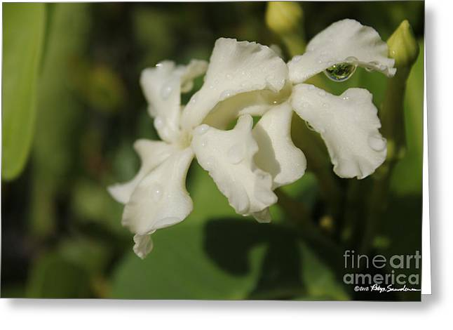Tropical Island Greeting Cards - White Tropical Flower Dew Drop Greeting Card by Robyn Saunders
