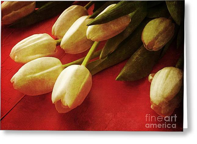 Beautiful Day Greeting Cards - White Tulips over Red Greeting Card by Edward Fielding