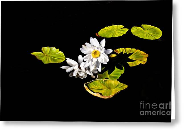 White Water Lilies Greeting Card by Frances Hattier