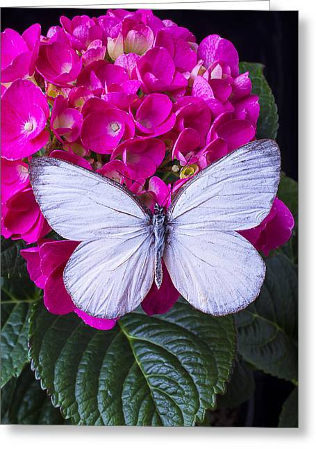 White Butterfly Greeting Cards - White Wings Greeting Card by Garry Gay