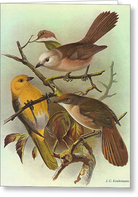 Creepers Greeting Cards - Whitehead Yellowhead and Brown Creeper Greeting Card by J G Keulemans