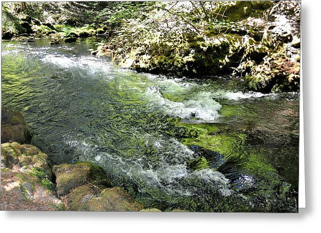 Green Foliage Greeting Cards - Whitehorse falls series 5 Greeting Card by Teri Schuster