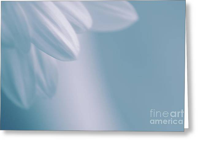 whiteness 02 Greeting Card by Aimelle