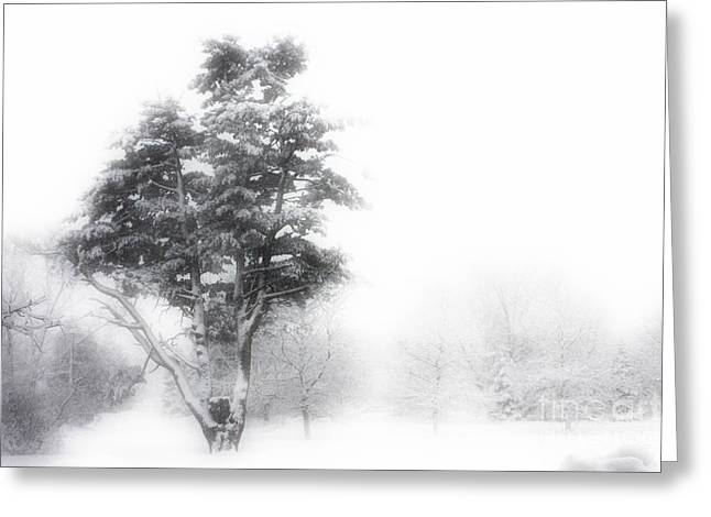 Blizzard Scenes Greeting Cards - Whiteout Greeting Card by Marcia Lee Jones