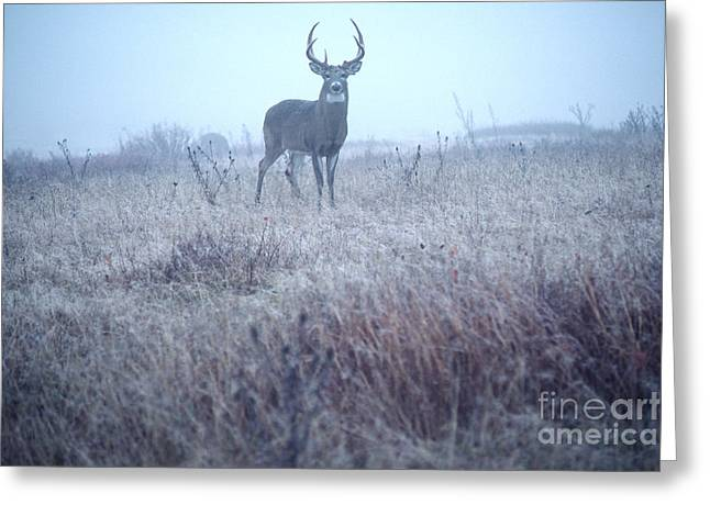 Foggy Day Greeting Cards - Whitetail Buck in Mist Greeting Card by Thomas R Fletcher