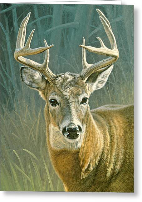 Wildlife Greeting Cards - Whitetail Buck Greeting Card by Paul Krapf