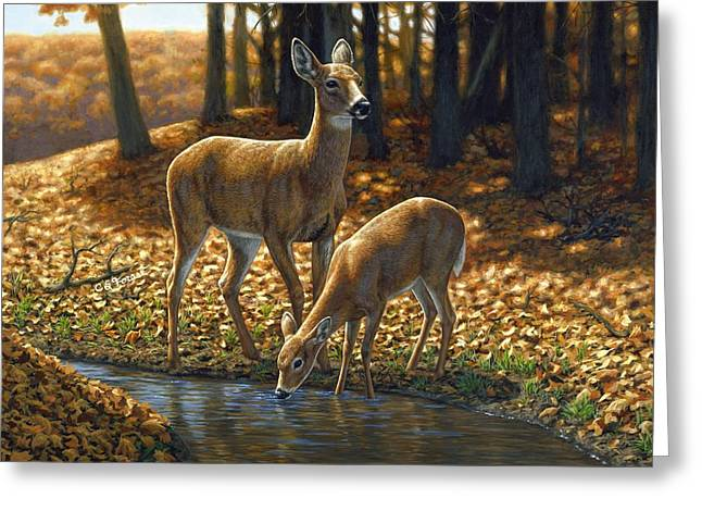 Stream Greeting Cards - Whitetail Deer - Autumn Innocence 1 Greeting Card by Crista Forest