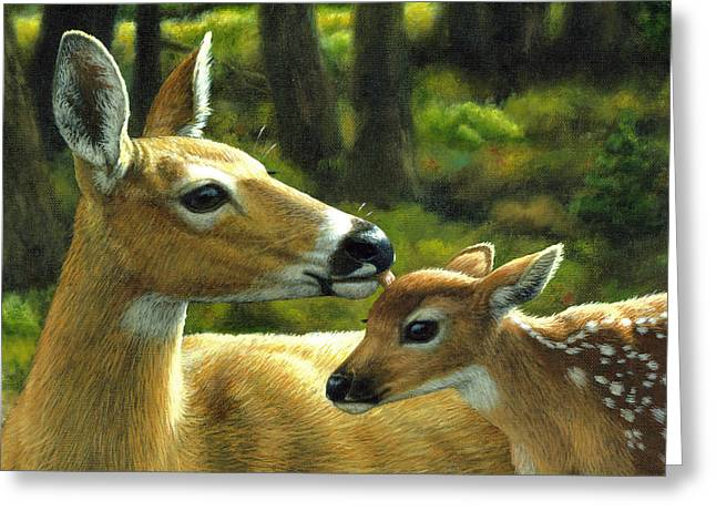White-tail Deer Greeting Cards - Whitetail Deer - First Spring - Closeup Greeting Card by Crista Forest