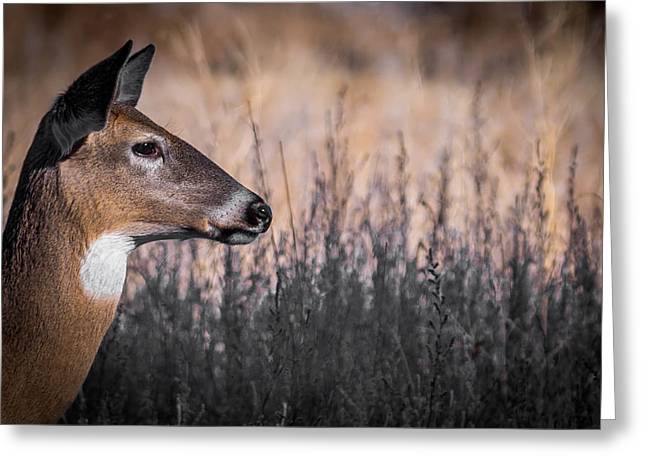 Fountain Creek Nature Center Greeting Cards - Whitetail Doe Keeping Watch 2 Greeting Card by Ernie Echols