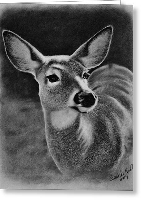 Photorealism Greeting Cards - Whitetail Doe Greeting Card by Samantha Howell