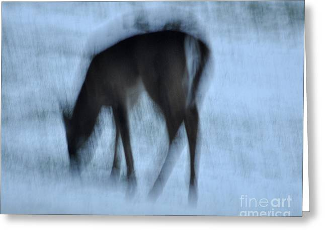 Wildlife Imagery Greeting Cards - Whitetail Dreams Greeting Card by Diane E Berry